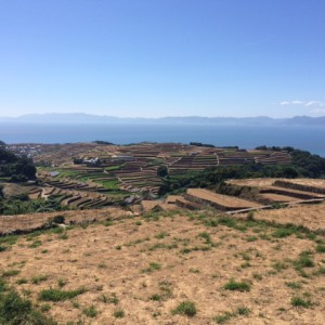 近くにある展望台からは、海をバックにして広がる棚畑の景観を眺めることが出来ます。天気が良いと、青い空、青い海、そして大自然を同時に堪能することが出来ます。