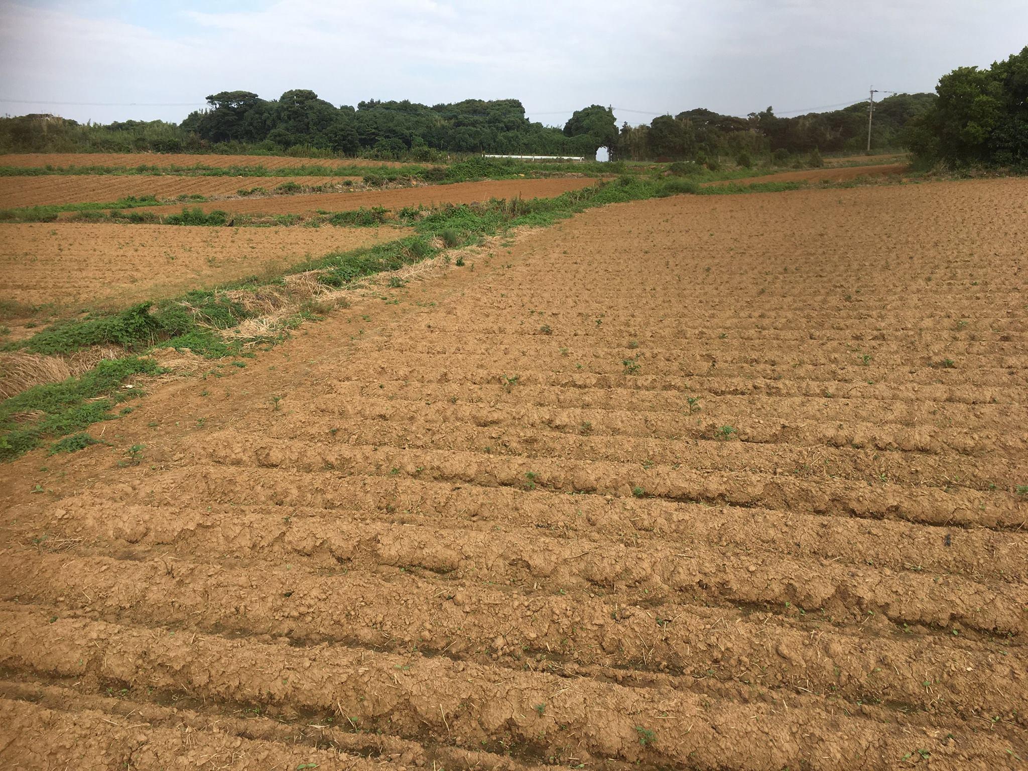 耕作放棄地を開墾・解消しながら植え付けしています。<br /> 今季も新しい農地が増えました。