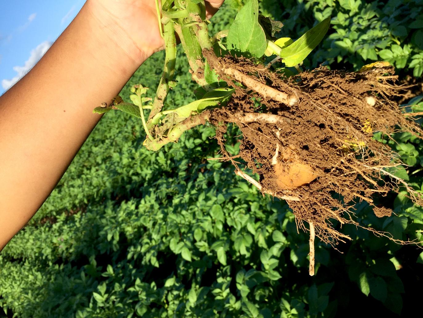 収穫は12月頃です。